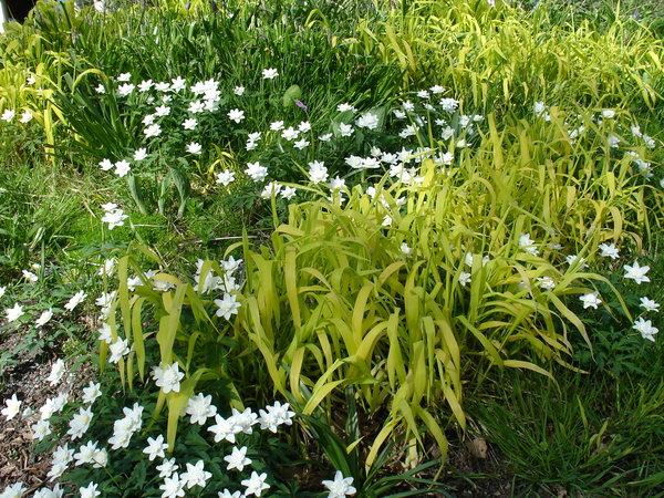 Matta av vårblommor och vackra blad