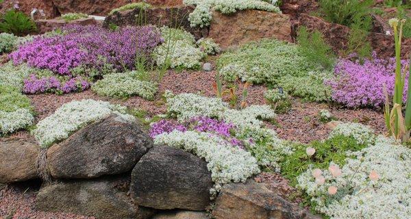 Matta med torktåliga växter