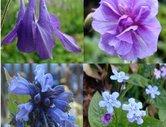 Blått - Violett